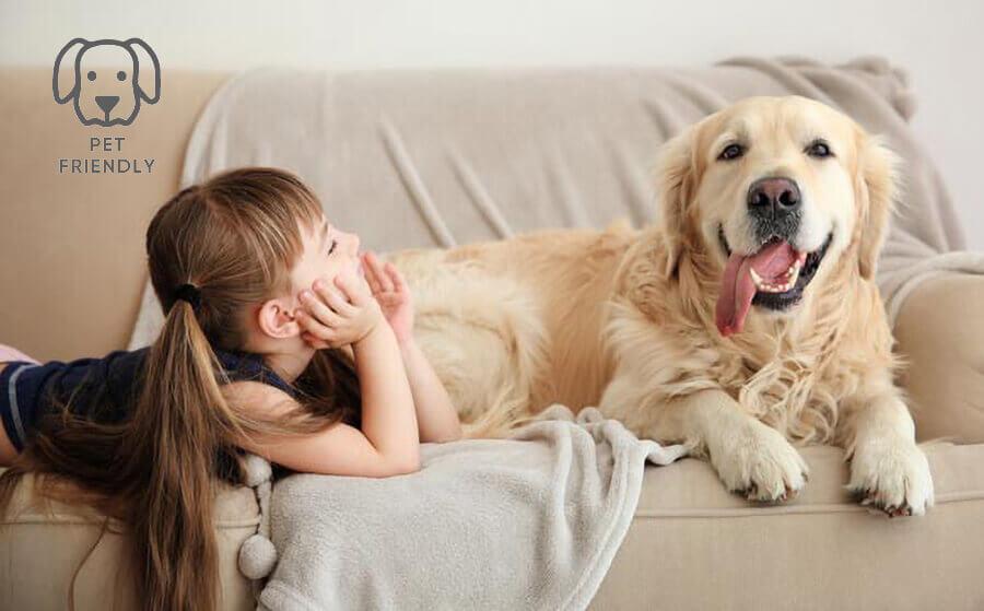 Cel mai bun material de tapițerie pentru animale de companie